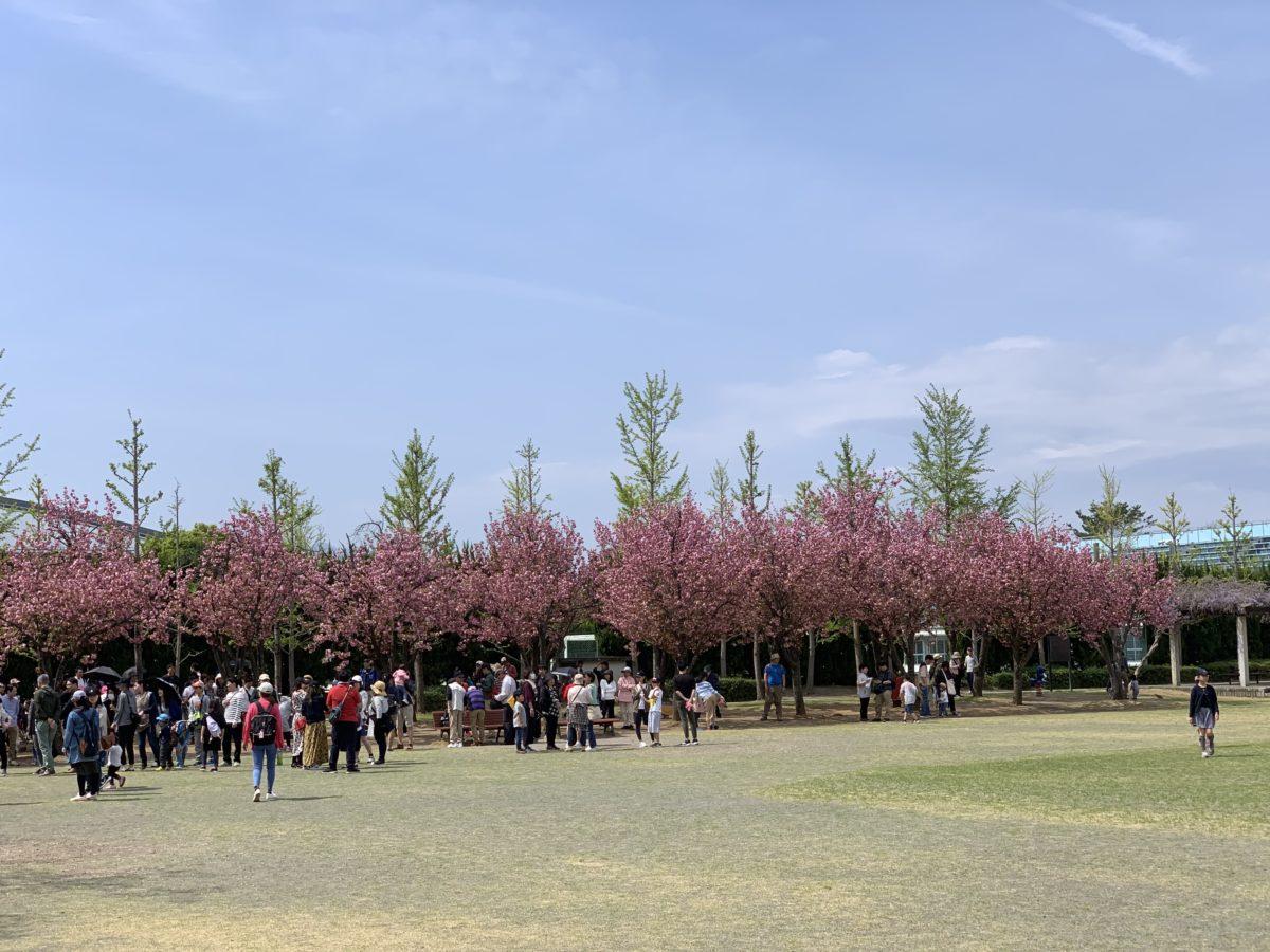 小瀬スポーツ公園の芝生広場