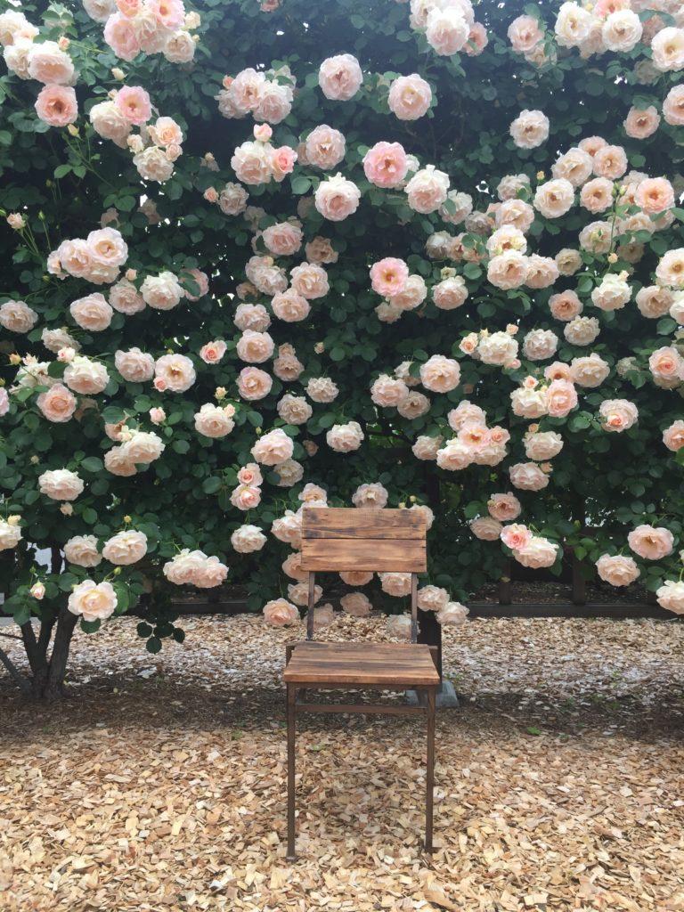 360℃のバラ庭園が楽しめる「カフェ ロココ」バラ園の椅子