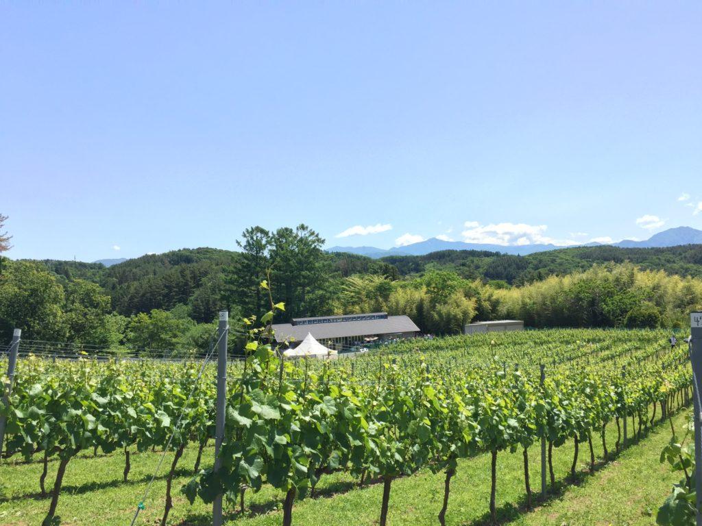 ドメーヌミエイケノの畑