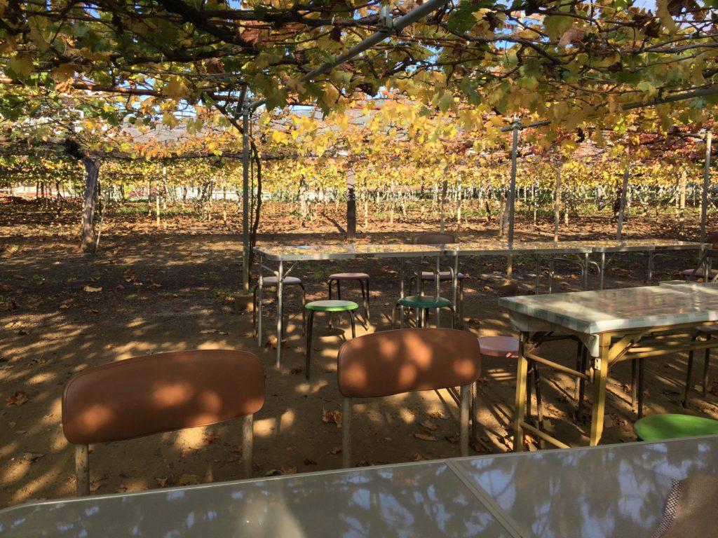 マルサン葡萄酒の畑