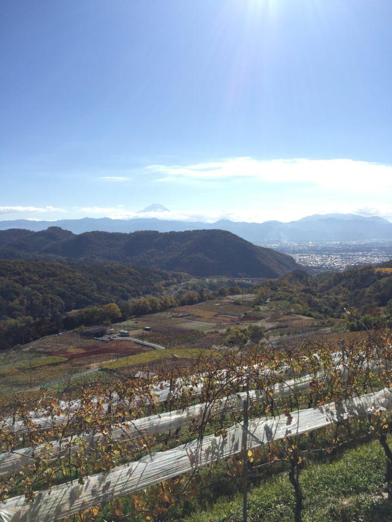 敷島醸造の畑から望む富士山