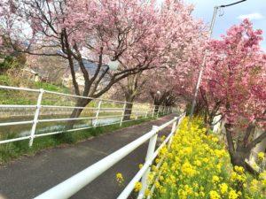 甲府市貢川にある芸術の小径の桜並木