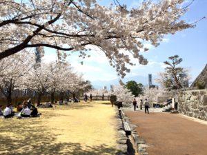 甲府市舞鶴城公園の桜