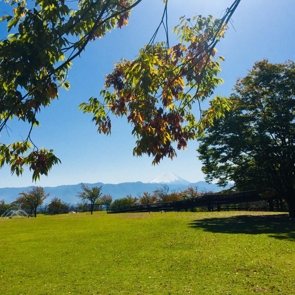 赤坂台総合公園からみる秋の富士山