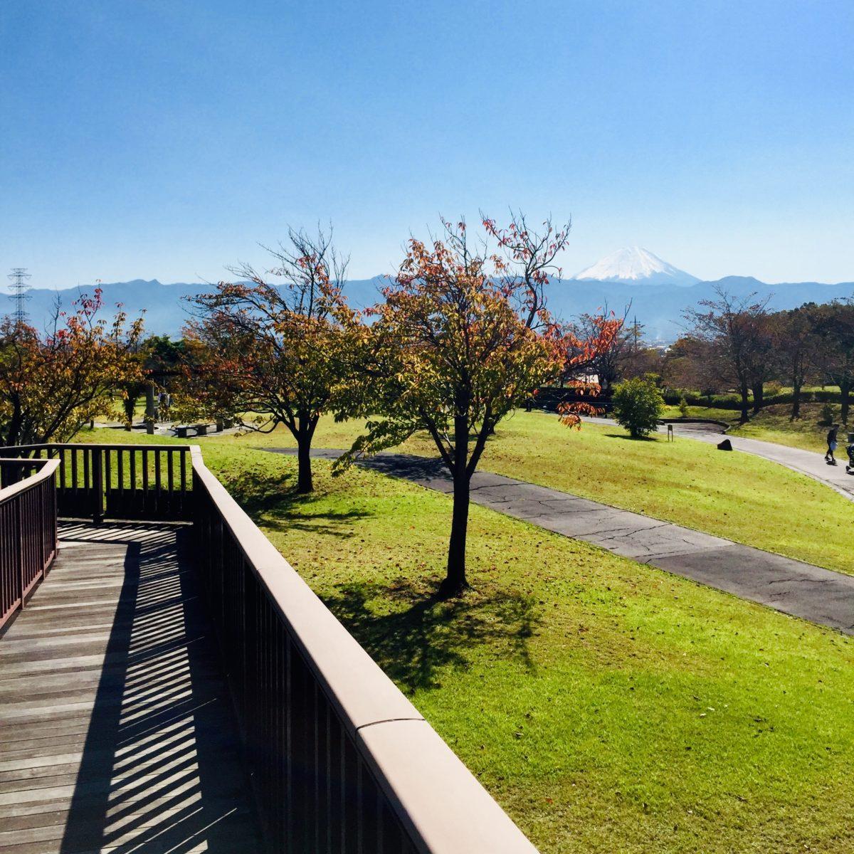 赤坂台総合公園にある森の回廊からみる富士山