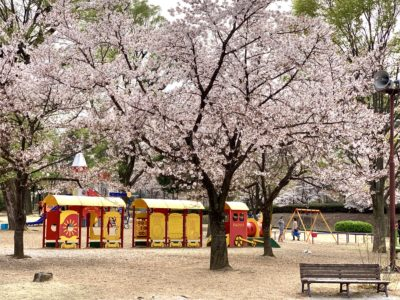御勅使川南公園 の桜