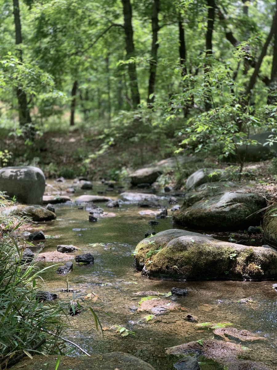 金川の森「どんぐりゾーン」の森のせせらぎ