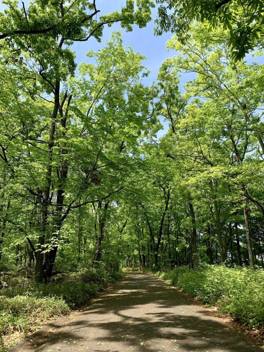 金川の森 どんぐりゾーンの舗装された道