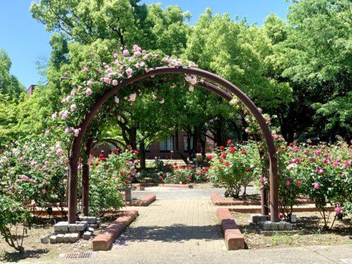 芸術の森公園内にあるバラ園のアーチ
