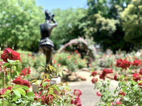 芸術の森公園内にあるバラ園の中心に位置する踊り子の彫刻を背面より