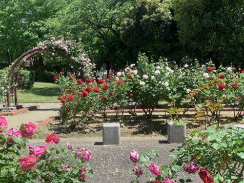 芸術の森公園内にあるバラ園の一部