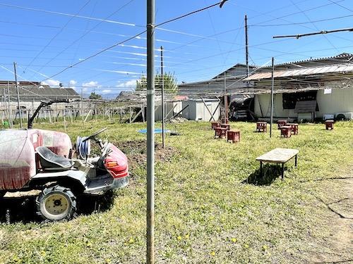八代醸造の畑とSS