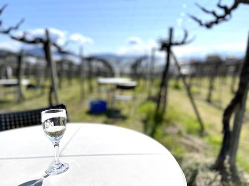ルミエールの畑で飲むグラスワイン